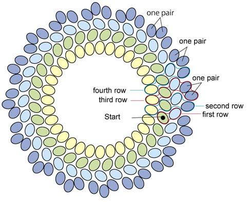 basic of circular type of plaited herringbone stitch