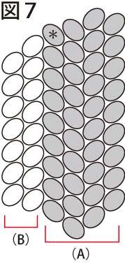 平面の基本形の編み方:両サイドが直線型:図7